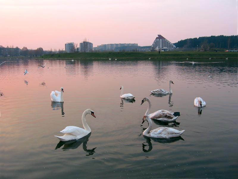 мир знакомства в беларуси